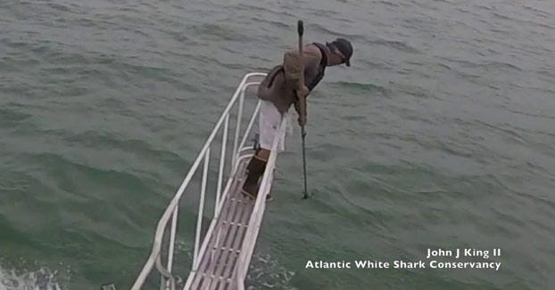 Un enorme tiburón blanco se abalanza sobre un científico en Cape Cod