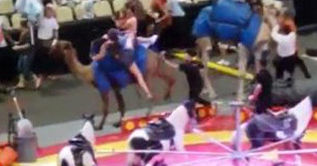 Un camello fuera de control hiere a varios espectadores en un circo en Estados Unidos
