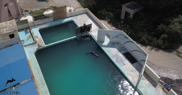 Este delfín lleva siete meses viviendo solo en el estanque de un acuario abandonado en Japón