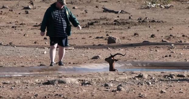 Un turista salva a un antílope que estaba atrapado en un pozo de barro