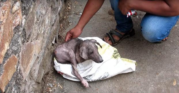 Impresionante el cambio de este perrito tras ser rescatado en las calles de India