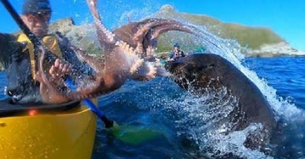 Cuando un león marino te sacude la cara con un pulpo