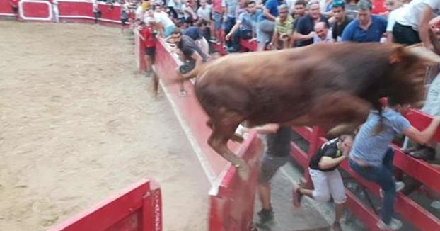 Un toro de 400 kilos salta dos veces seguidas la barrera de la plaza de Villafranca y huye del pueblo