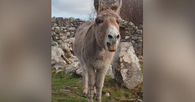 Sensación en las redes con este burro que canta ópera