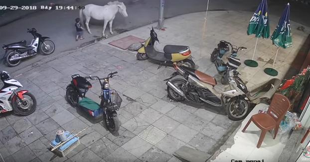 Un niño se acerca a golpear al caballo y este le mete una coz y lo lanza contra una moto