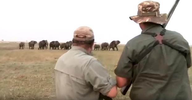 Unos cazadores disparan a un elefante y su manada se lanza contra ellos