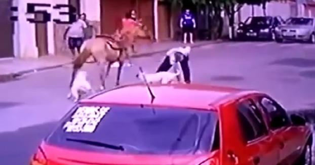 Dos pitbulls atacan a un caballo que va tranquilamente con su dueño