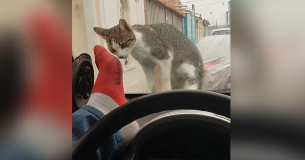 Karma instantáneo por intentar asustar al gato