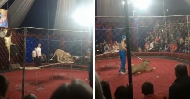 Una leona ataca a una niña de 3 años en un circo y le muerde en la cabeza