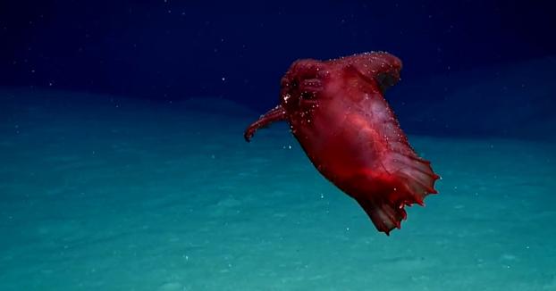 """Una cámara submarina logra captar una criatura marina apodada """"el monstruo del pollo sin cabeza"""""""
