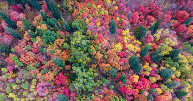 Espectáculo de color cuando el otoño llega a los bosques de Utah