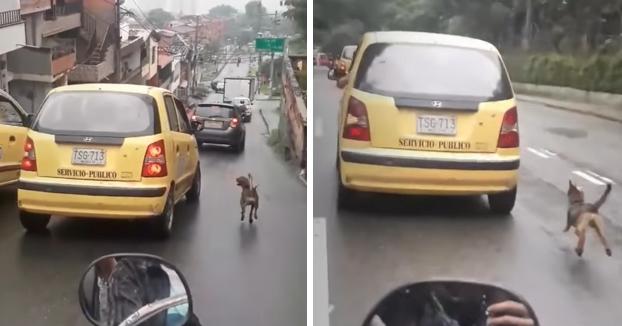 Graban a un perro callejero persiguiendo a un taxi desesperadamente durante 20 manzanas en Medellín