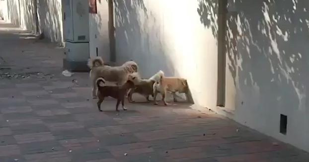 ''No sé a qué reunión secreta esta entrando mi perro, pero quiero ir''
