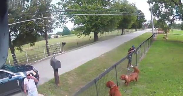 Pillados robando un cachorro de dogo de burdeos delante de sus padres