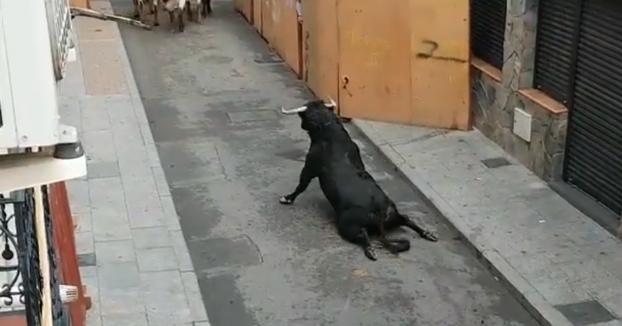 Un toro se rompe las patas nada más salir del cajón durante los encierros de Mejorada del Campo