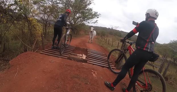 Unos ciclistas intentan espantar a un toro que no les quería dejar pasar por el camino