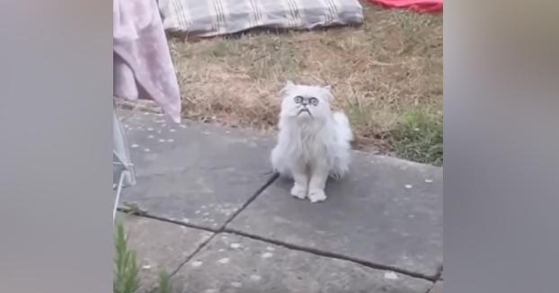 ''Maaa!!, hay un gato muy raro en el jardín!!''