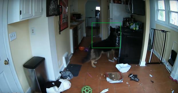 Este perro casi acaba incendiando la casa. La cámara de seguridad grabó cómo sucedió