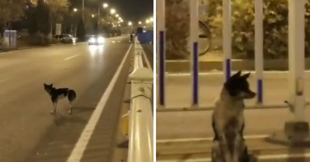 La historia del perro que lleva más de 80 días en la misma carretera en la que murió su dueña