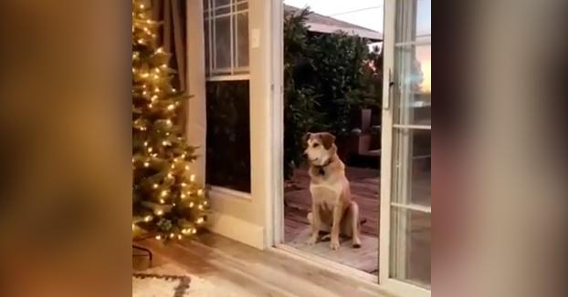 El perro que espera sentado hasta que le abran una puerta invisible