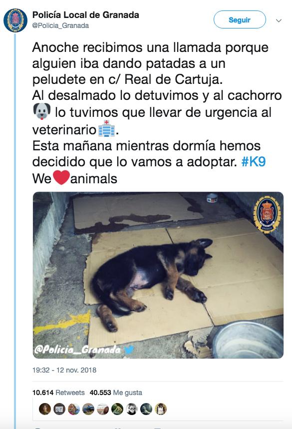 La policía de Granada rescata a un perro que estaba siendo maltratado por su dueño y lo adoptan. Tras una votación en Twitter lo han llamado Stan Lee