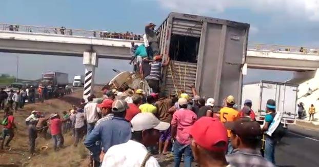 Dos camiones chocan en una autopista de Veracruz y decenas de personas aprovechan para robar el ganado de uno de ellos