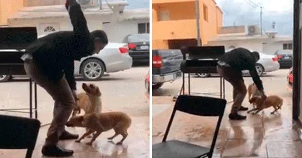 Amenazan de muerte a Gerardo Herrera, el hombre que apuñaló a un perro con un navaja