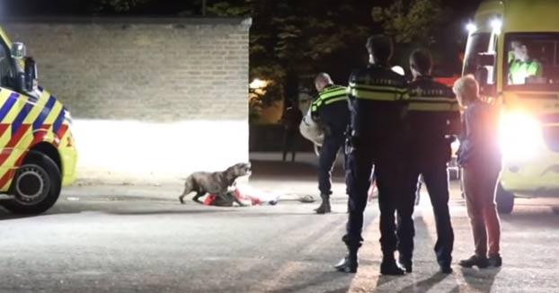 Unos policías consiguen controlar sin hacer daño a un perro que no quiere separarse de su dueña inconsciente en el suelo