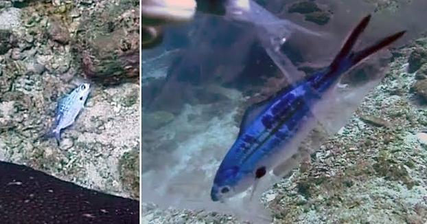 Estamos acabando con el planeta: Un buzo rescata a un pez que se quedó atrapado en una bolsa de plástico