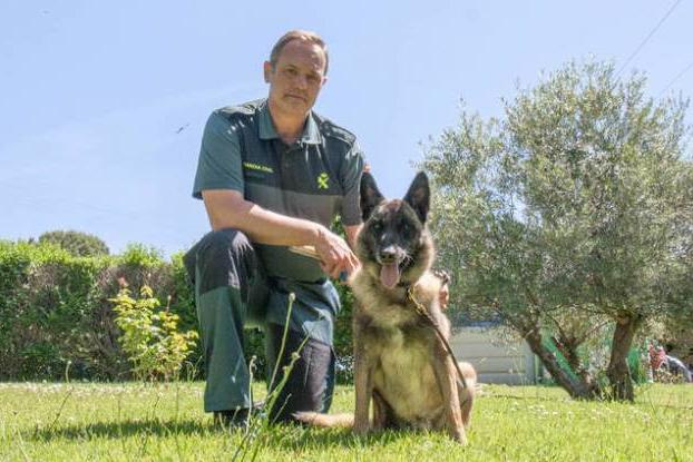 Elton, el perro que fue determinante en la búsqueda de Diana Quer, se retira tras participar en más de 500 casos
