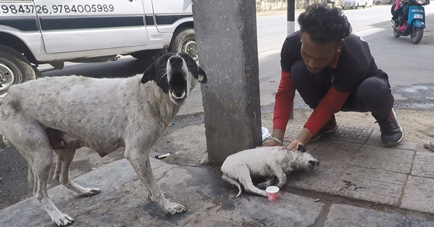 Una perra callejera pide ayuda para su cría gravemente herida. La ayudan y el cambio es increíble