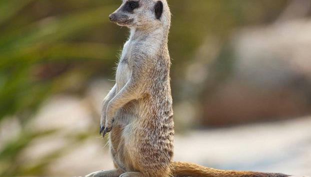 Especial San Valentín: Un zoo da la oportunidad de poner el nombre de tu ex a una cucaracha que luego servirá de alimento para una suricata