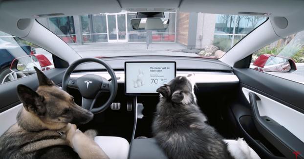 Tesla lanza el Dog Mode, un sistema que regula la temperatura del interior del coche para cuando un perro se quede dentro durante un recado