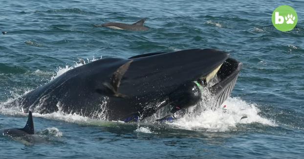 Una ballena se traga a un buzo y lo escupe vivo en una playa en Sudáfrica