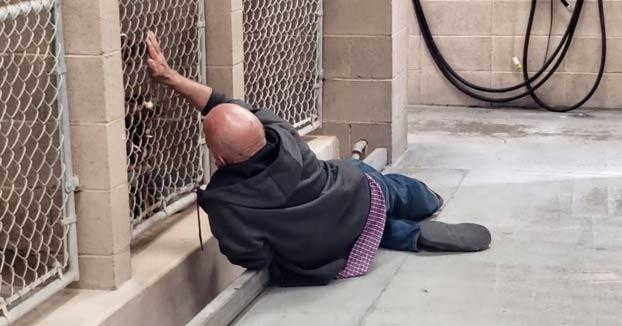 Un hombre sin hogar tirado en el suelo intentando acariciar a sus perros con hora programada para ser sacrificados