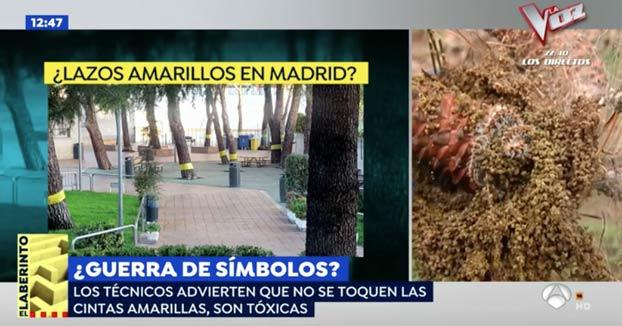 Retiran lazos amarillos de un barrio de Madrid y resultaron ser cintas contra una plaga de orugas. Las cintas son muy tóxicas y no se pueden quitar sin guantes
