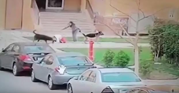 Una mujer protege con su cuerpo a un niño del ataque de dos perros y le salva la vida