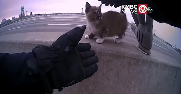 Este policía rescata a un gatito que estaba en la mediana de una autopista y posiblemente acabase atropellado