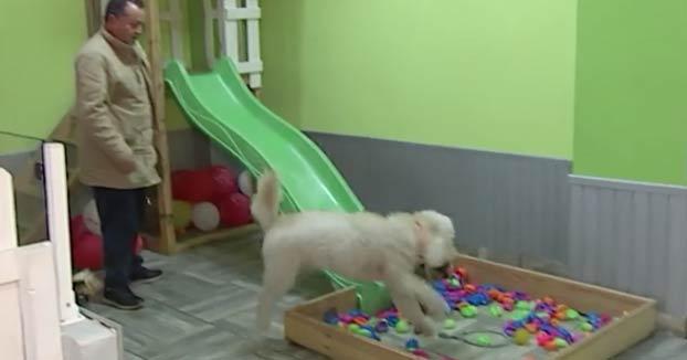 Abren un bar en Bilbao donde se podrán celebrar ''perricumples'', fiestas de cumpleaños para perros