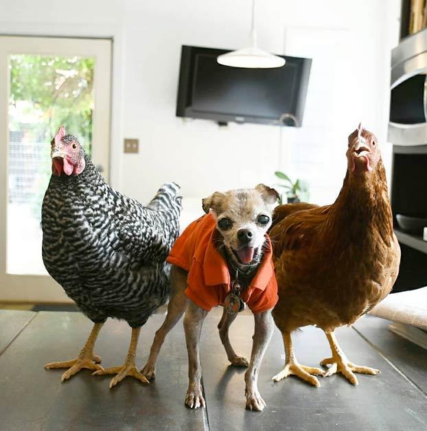 Un hombre adopta a perros mayores y animales de granja para darles una vida mejor
