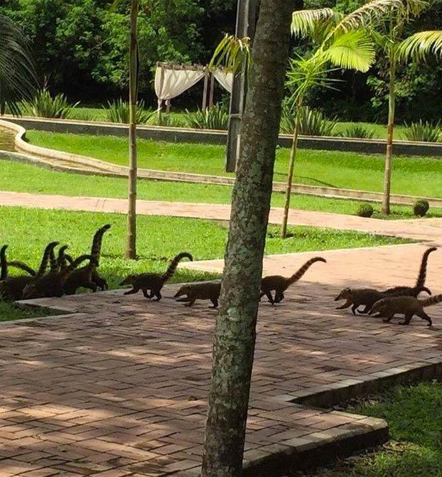 ''Díganme que no soy el único que ve una manada de minidinosaurios''
