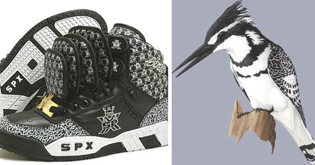 La relación cromática entre las zapatillas y los pájaros