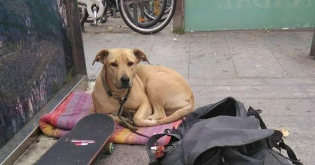 El juez imputa al guardia urbano que mató a la perra Sota de un disparo en Barcelona