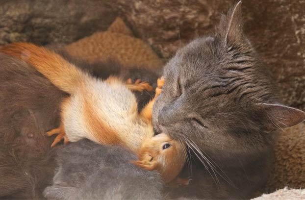 Pusha, la gata que adoptó a cuatro ardillas huérfanas