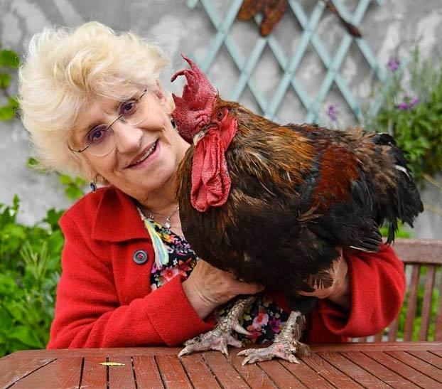 A juicio un gallo en Francia por cantar demasiado temprano
