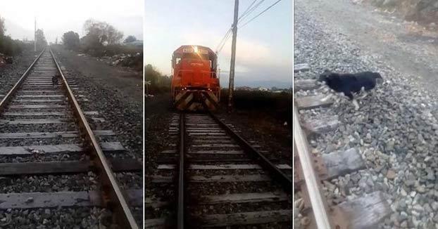 Un maquinista detiene el tren para salvar a un perro encadenado a la vía