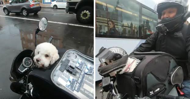 Milly, una perrita rescatada que va en moto a todas partes con su dueño