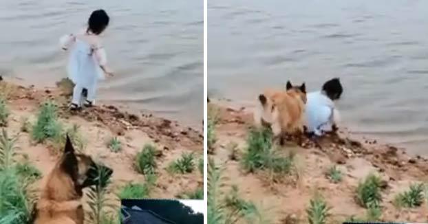 El perro presiente que la niña puede caer al río al intentar recuperar la pelota y decide actuar