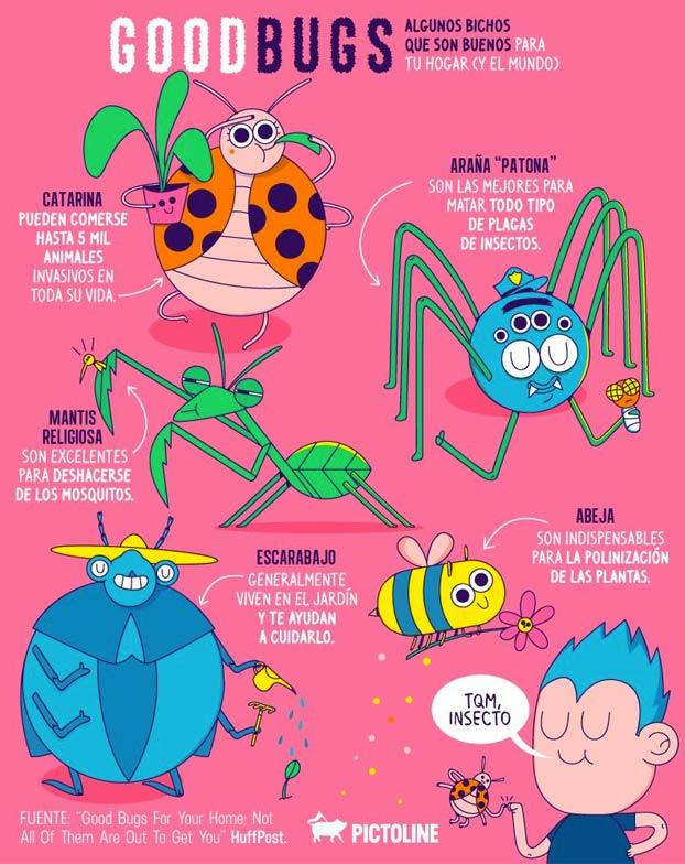 ¿Sueles matar a los bichos que encuentras en tu casa? Aquí una breve guía para saber cuales pueden ser buenos para tu hogar