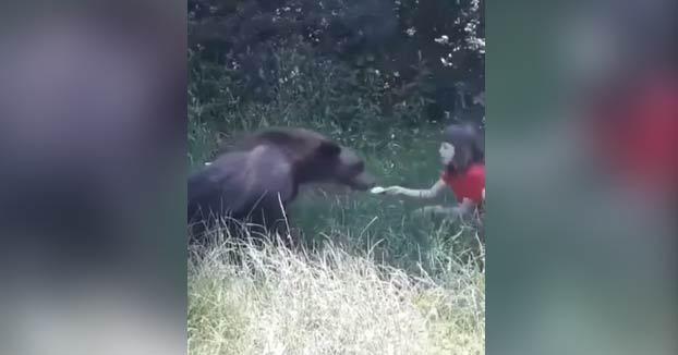 Unos jóvenes dan de comer a un oso salvaje de sus propias manos